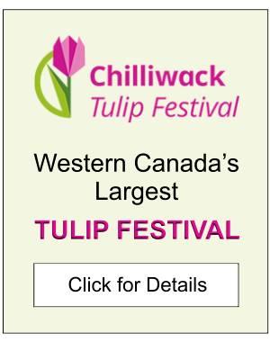 Chilliwack Tulip Festival Ad